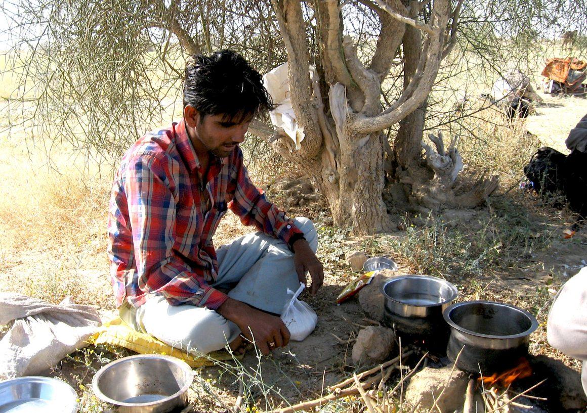 dromadaire désert du Thar Jaisalmer Rajasthan