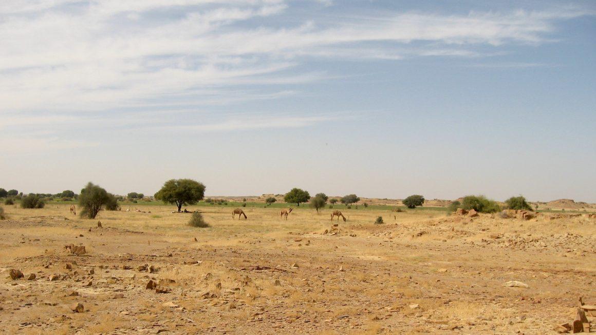 désert du Thar Jaisalmer Rajasthan