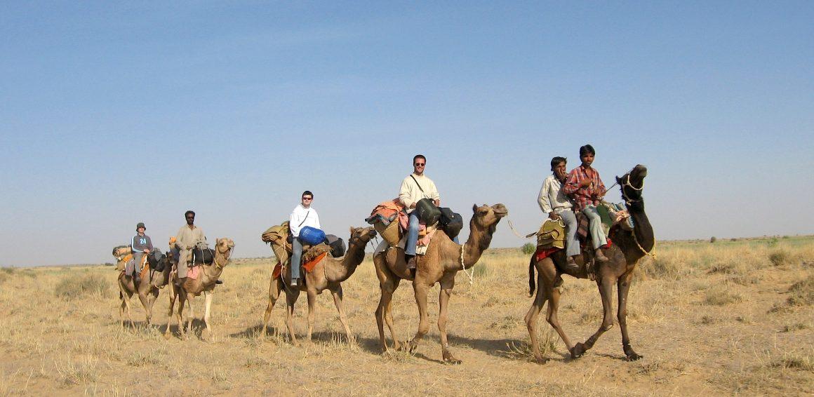 dromadaire désert du Thar jaisalmer