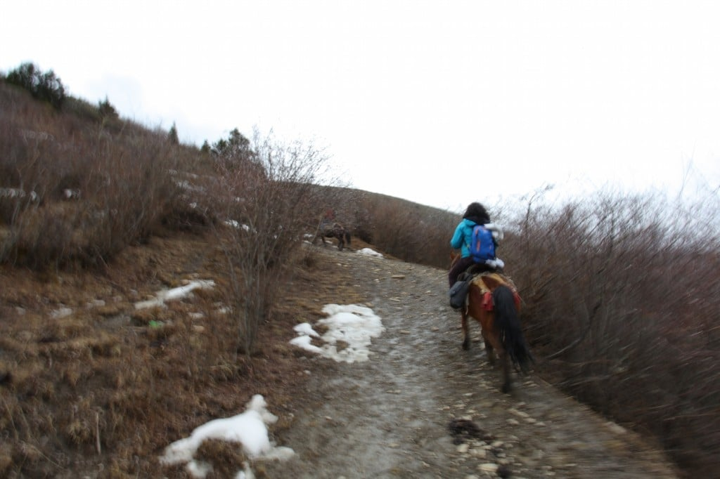 trek cheval hiver songpan
