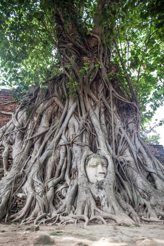 Bouddha dans l'arbre