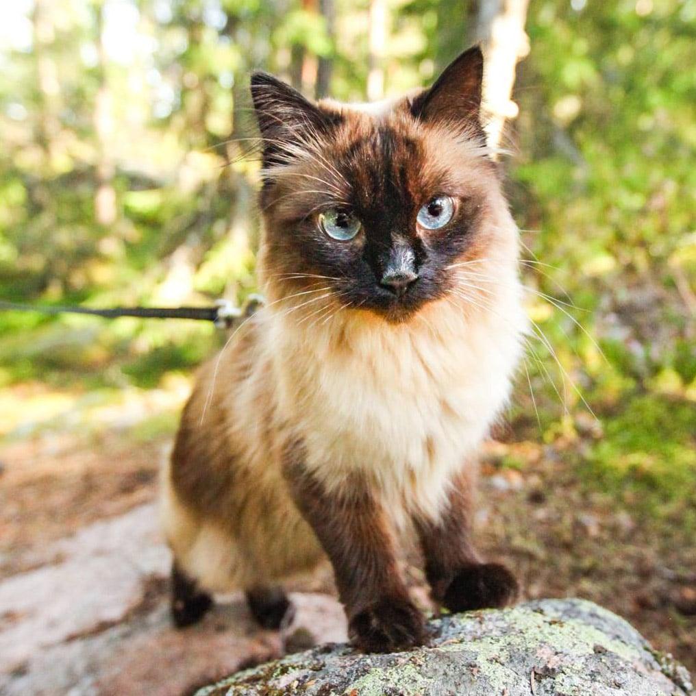 kiwi chat laisse voyage