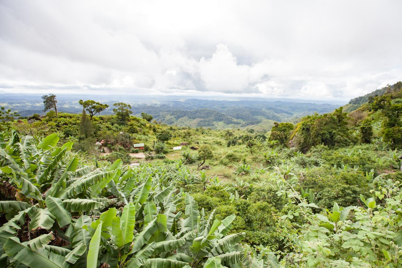 train Fianarantsoa-Manakara paysage