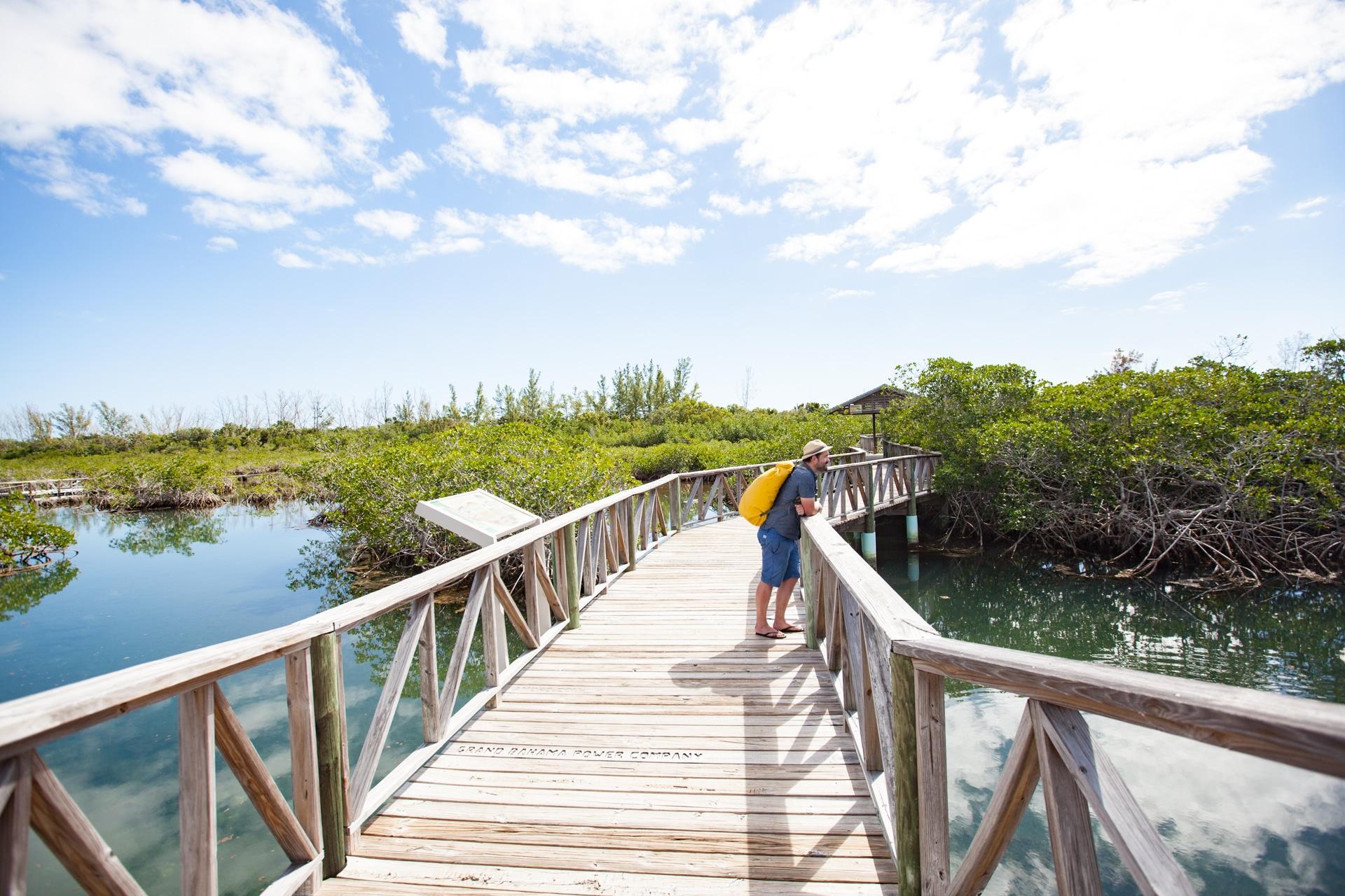Voyage aux Bahamas Grand Bahama mangrove