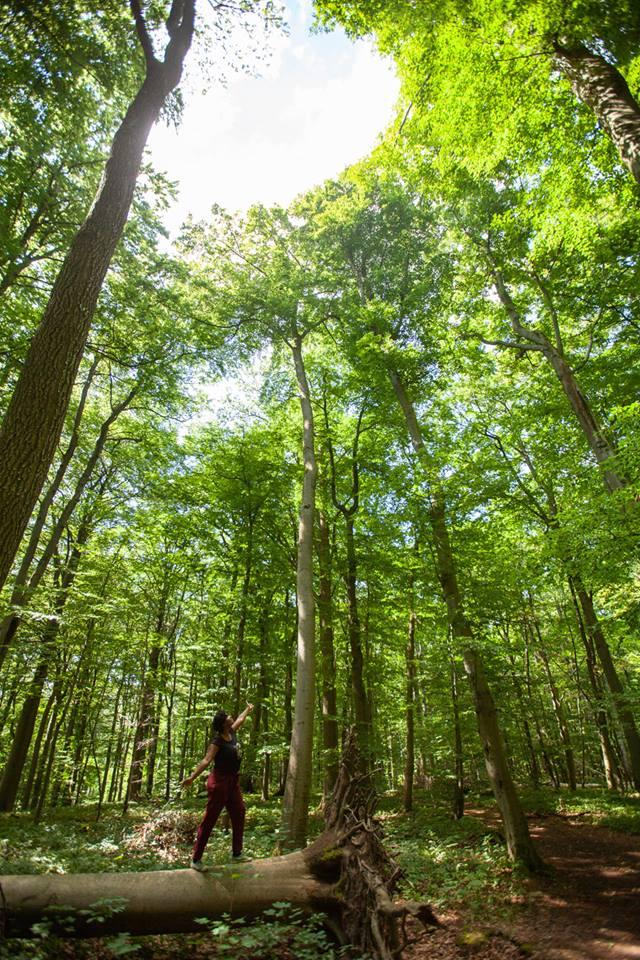 parc national Hainich Thuringe