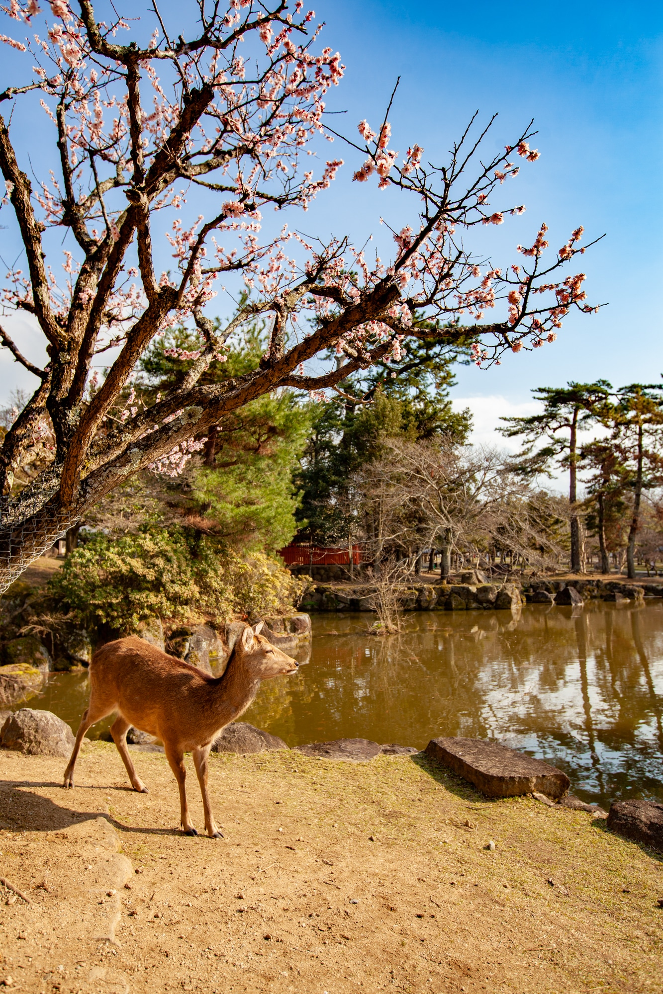 visiter Nara Japon